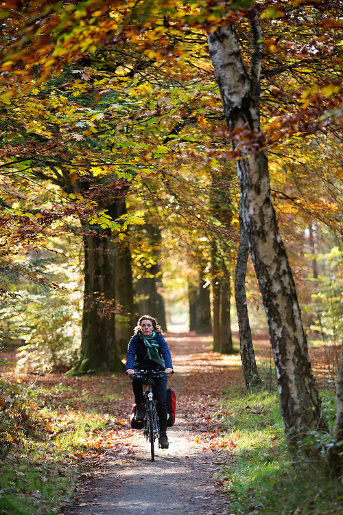 Bij Austerlitz geniet een vrouw op een fiets van het mooie herfstweer.<br /> <br /> Cyclists enjoy the beautiful autumn weather in the woods near Zeist.