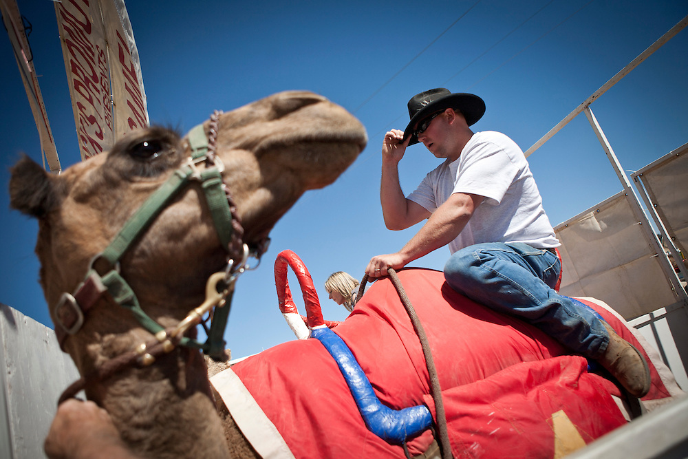 Ryan Gillaspie, of Pioneer, Calif. in the chute at the 51st annual International Camel Races in Virginia City, Nevada  September 12, 2010. .CREDIT: Max Whittaker for The Wall Street Journal.CAMEL