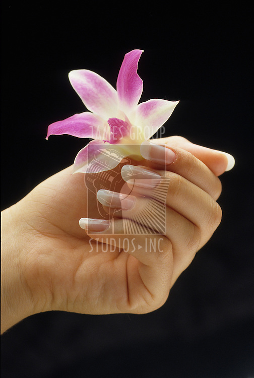 female hand holding flower on black background
