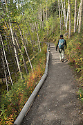 Hiker on McKinley Station Trail, Denali National Park, Alaska