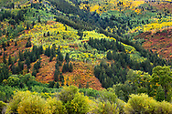 Autumn colors,  Independence Pass, Colorado