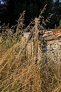 Derelict farm shack and long grasses, in Langlade, Charente-Maritime, France.