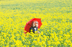 © Licensed to London News Pictures. 17/04/2019.<br /> Sevenoaks, UK. A lady walking through a bright yellow rapeseed field with her red umbrella providing shade from the warm sunny weather in Sevenoaks, Kent. Photo credit: Grant Falvey/LNP
