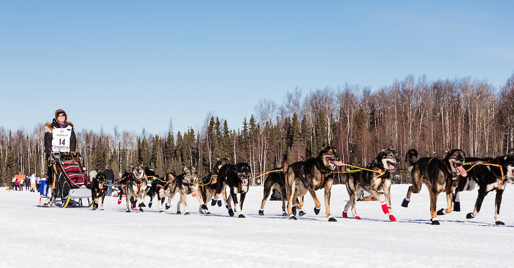 Musher Jodi Bailey competing in the 44th Iditarod Trail Sled Dog Race on Long Lake after leaving the restart on Willow Lake in Southcentral Alaska.  Afternoon. Winter.