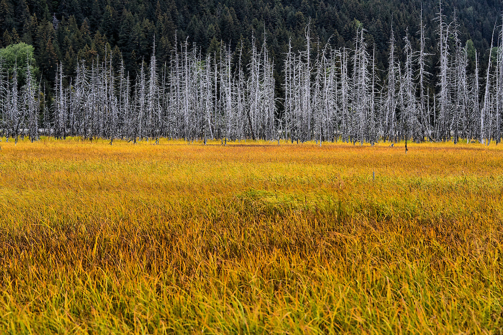 Ghost Forest along Seward Highway in Alaska<br />