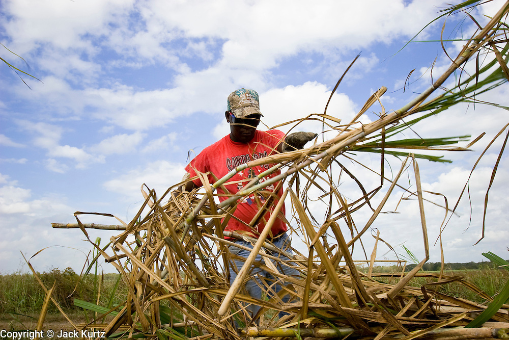 15 NOVEMBER 2005 - FRANKLIN, LA: ROGER GABRIEL, a worker on Jesse Breaux' sugar cane farm, stacks cut cane while working the cane harvest during the 2005 sugar cane harvest. Louisiana is one of the leading sugar cane producing states in the US and the economy in southern Louisiana, especially St. Mary and Iberia Parishes, is built around the cultivation of sugar. Statewide, more than 460,000 acres of land is cultivated with sugar cane and more than 27,000 people work in the sugar industry in Louisiana. Sugar growers in the area are concerned that trade officials will eliminate sugar price supports during upcoming trade talks for the proposed Free Trade Area of the Americas (FTAA). They say elimination of price supports will devastate sugar growers in the US and the local economies of sugar growing areas. They also say it will ultimately lead to higher sugar prices for US consumers.   PHOTO BY JACK KURTZ