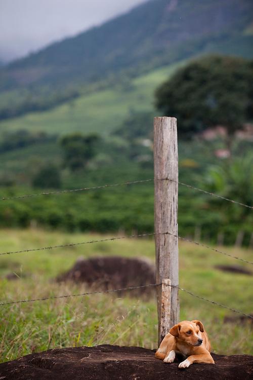 Alto Caparao_MG, Brasil...Cachorro em uma paisagem rural. Esse lugar faz parte da Rota Imperial...The dog in a rural landscape. This place is the Imperial Route...Foto: BRUNO MAGALHAES / NITRO