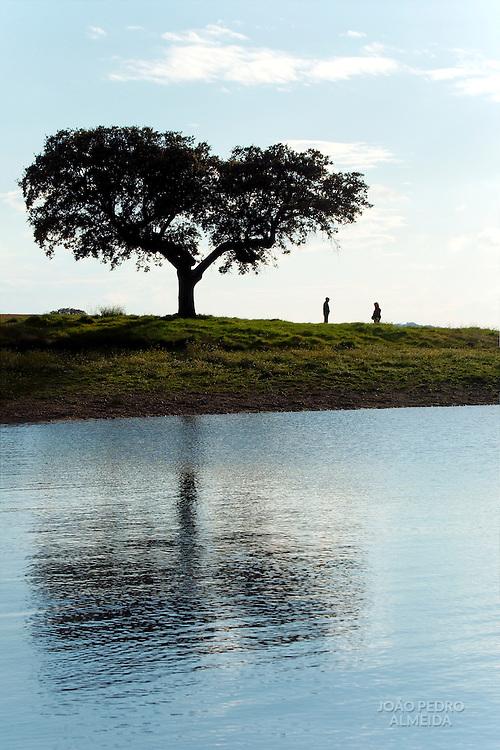 Cork tree at the shores of Alqueva damn