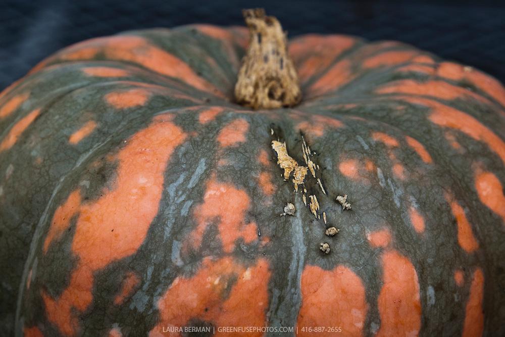 Orange and green  Speckled Hound pumpkin.