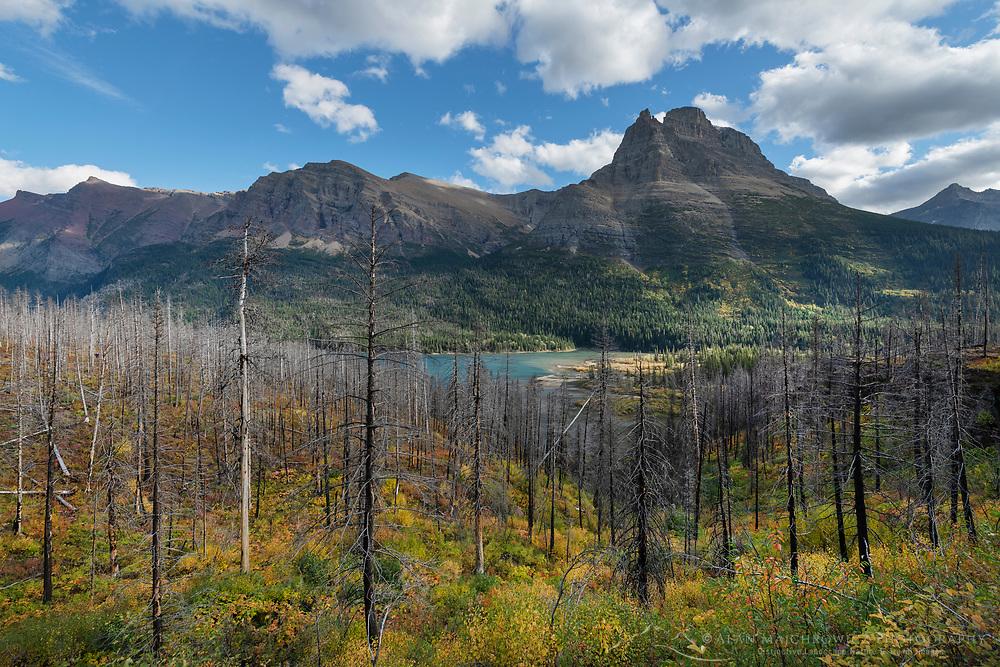 Burned trees along trail to Sanit Mary Falls, Glacier National Park Montana