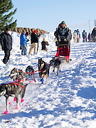 Matt Schmidt of Grand Marais, MN, sets off on his ten-dog class sled race on Sunday, 2 Feb 2014. Scenes from the Apostle Islands Sled Dog Race, hosted by the Bayfield Chamber of Commerce, near Bayfield, WI