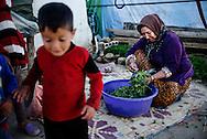 Flygtningelejr i Jeb Jenin. Joureya Abd Majid Shaikh. Sammen boede tre kvinder og 15 b&oslash;rn. Alle m&aelig;nd var d&oslash;de i krigen. <br /> <br /> Refugee settelment in Jeb Jenin.