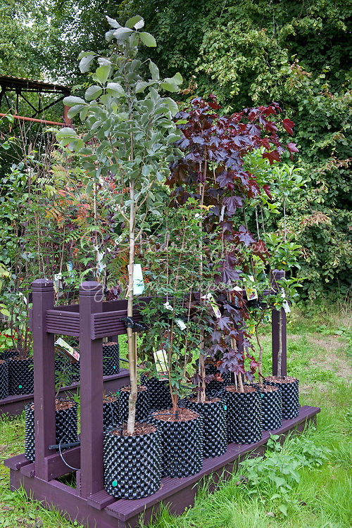 Trees grown in Air-Pots for sale on a stand