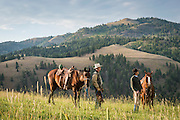 Midsummer hunt for cattle on a ranch outside of Salmon, Idaho.