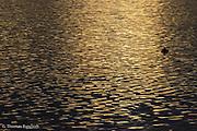 Morning light reflected across Lake Washington