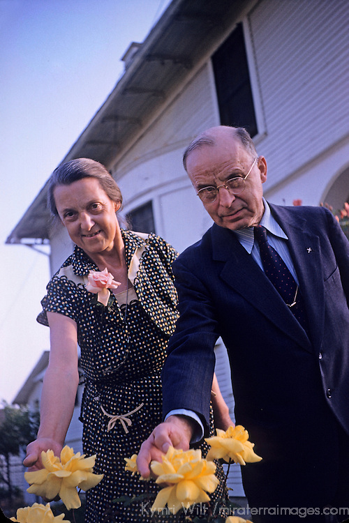 USA, America. Vintage slidescan of a  midwestern couple showing off their garden roses, c. 1950's. Private collection.