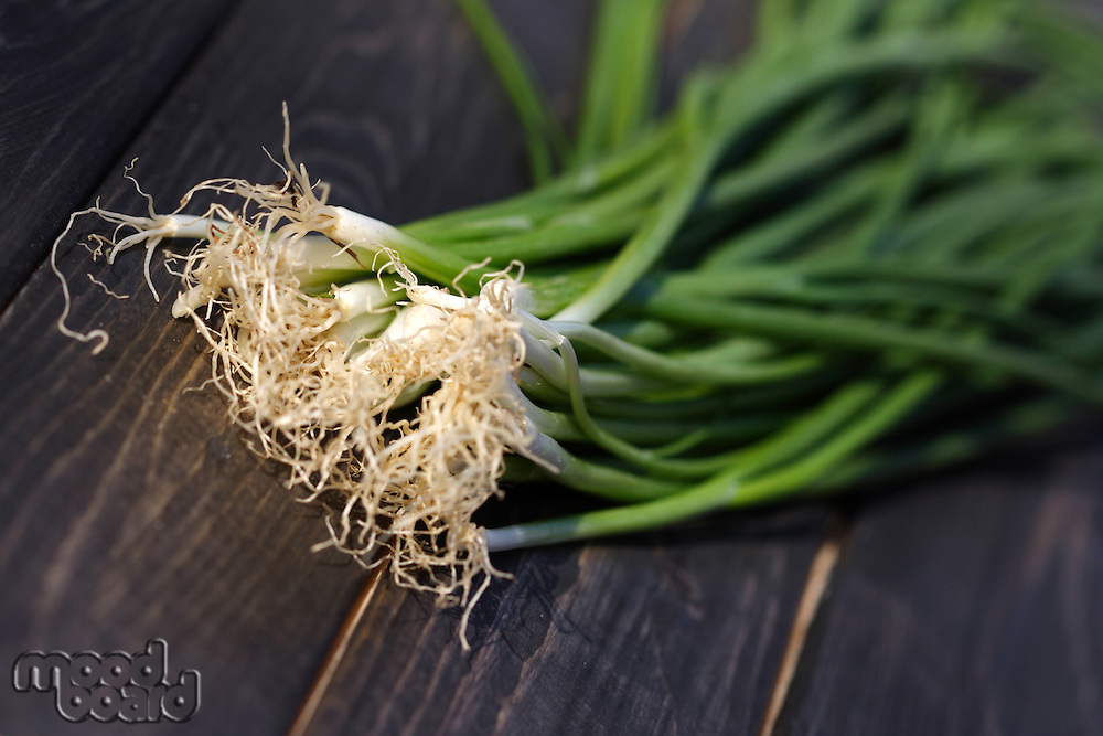 Studio shot of chive - close up