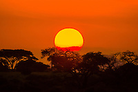 Sunrise over acacia trees, Tarangire National Park, Tanzania