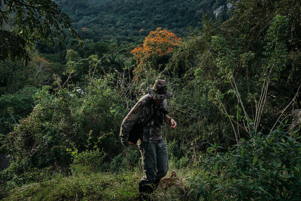 Ornithologists Martjan Lammertink, right and Tim Gallagher, look for birds in the morning in Fallarones in Eastern Cuba on Jan 25, 2016.