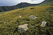 Spring Mountain and alpine tundra, Sangre de Cristo Wilderness, San Isabel National Forest, Colorado