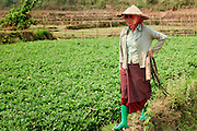 Mar. 12, 2009 -- BAN THO THAN, LAOS:  A peasant woman walks along the edge of her peanut field in Ban Tho Than, Laos, near Vang Vieng. Photo by Jack Kurtz