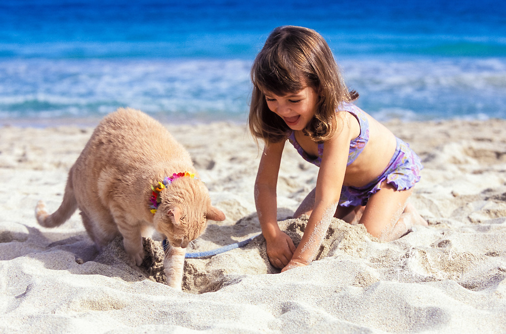 Oahu, Hawaii, USA --- Girl Playing With Pet Cat on Beach