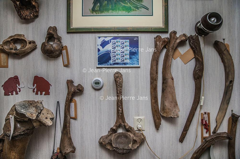 Nederland, Hoofddorp, 21 september 2016.<br /> Dick Mol, de sabeltandkattenexpert toont zijn liefde voor uitgestorven diersoorten zoals de mammoet en de sabeltandkat. Ook heeft hij fossiele hoektanden van deze kat in zijn verzameling.<br /> <br /> <br /> Netherlands, Hoofddorp, September 21, 2016.<br /> Dick Mol, the machairodontinae expert shows his love for extinct animals such as the mammoth and the saber-toothed cat. He also has fang fossil of this cat in his collection.<br /> <br /> <br /> Foto: Jean-Pierre Jans