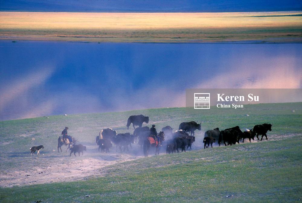 Man herding yaks on the Pamir Plateau, Xinjiang Province, Silk Road, China
