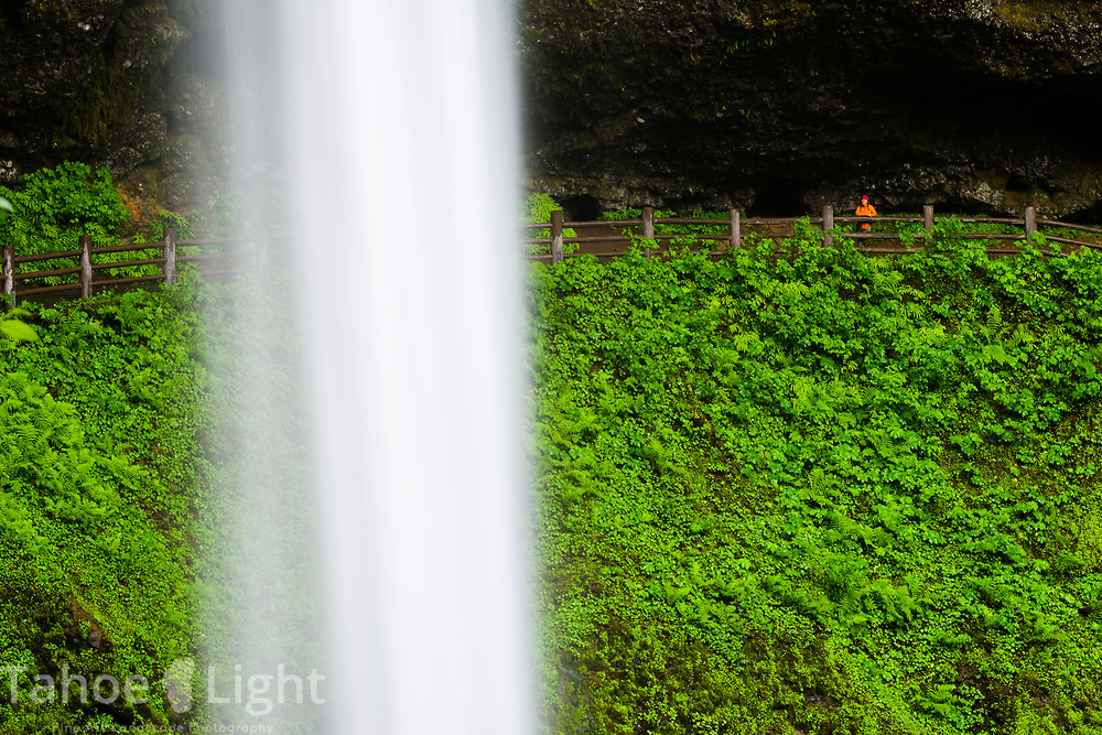 A hiker on the trail behind South Falls at the Silver Falls State park in northern Oregon. The lush greenery and waterfalls of the Pacific Northwest are a must visit.