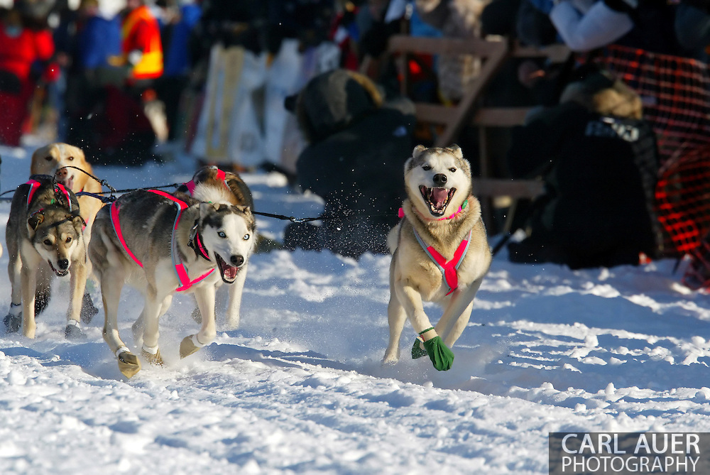 3/4/2007:  Willow, Alaska -  The lead dogs of Veteran DeeDee Jonrowe of Willow, AK, in her 25th Iditarod head out at the start of the 35th Iditarod Sled Dog Race.  Jonrowe would have to pull out of the race a day later after taking a hard fall injuring one of her hands bad enough that she could not care for her dogs as needed on the trail.