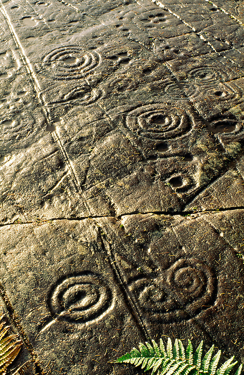 Rock art. Excellent example of prehistoric cup and ring marks on outcrop at Achnabreck in Kilmartin Valley, Argyll, Scotland, UK