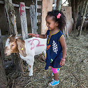 "DUMFRIES, VA - SEP12: Jude Elsanousi, 4, plays with goats and sheep at the Shah Farm in Dumfries, VA, September 12, 2016. The animals  will be slaughtered in honor of Eid al-Adha, the ""Feast of the Sacrifice"". (Photo by Evelyn Hockstein/For The Washington Post)"