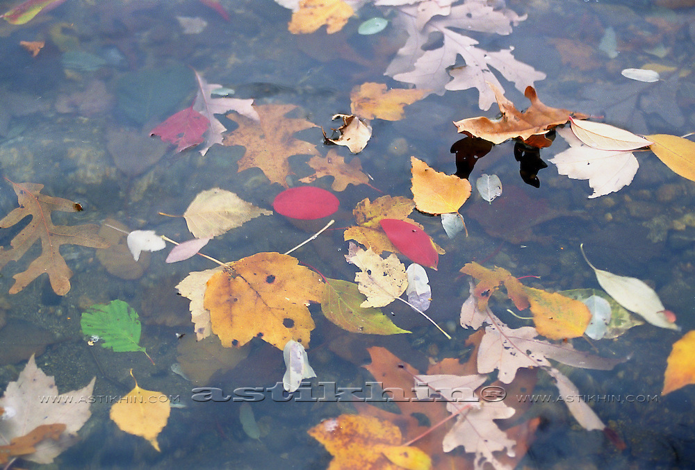 Leafs in water