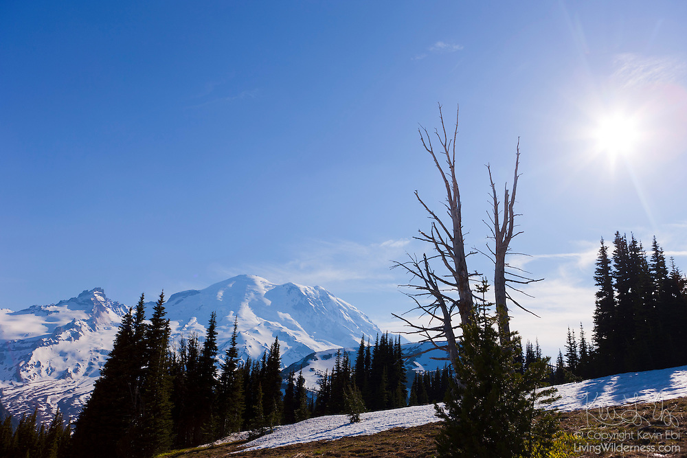 The midday sun shines over Sunrise, a high alpine meadow in Mount Rainier National Park, Washington. At 6,400 feet (1,951 meters), the growing season is very short. The meadow is typically snow-covered for all but three or four months per year.