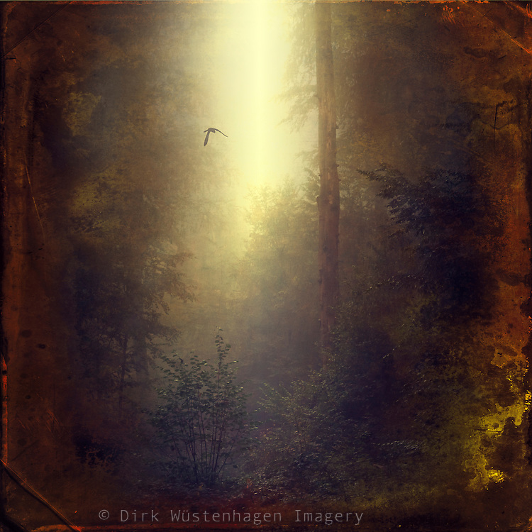 Mystic forest secnery in backlight - textured photograph<br /> Prints &amp; more from S6: https://society6.com/product/wonderland-iv8_print#1=45