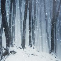 Winter Realm