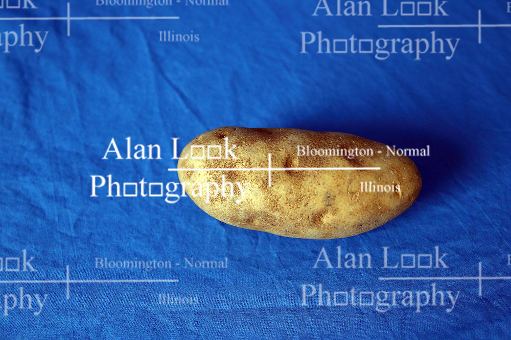 18 February 2016:   Studio - Potato on blue #019.  A single baking potato shot in a studio on a blue background.