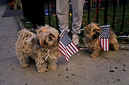 USA. New York -dog with american flag in Manhattan  New york  Usa /  chien avec drapeau americain,  a Manhattan  New york  USA