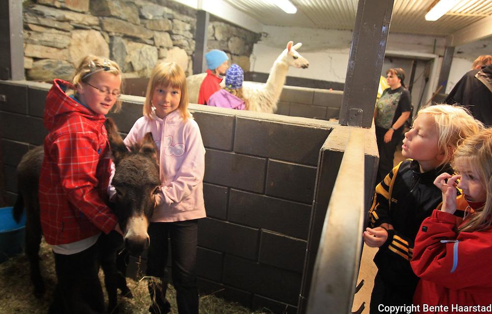 Første villmarksmesse i Stugudal. Ane Maren Sesseng Nordfjell (t.v. Og Nina Øian Kåsen synes eselet er veldig søtt. Foto: Bente Haarstad Villmarksmessa i Stugudal arrangeres hvert år på seinhøsten.