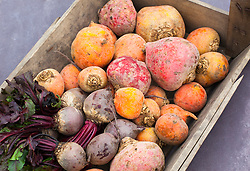 Mixed coloured beetroot in a wooden trug