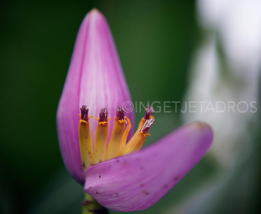 A Lotus flower in a pond in Ubud. &copy;Ingetje Tadros<br /> www.ingetjetadros.com