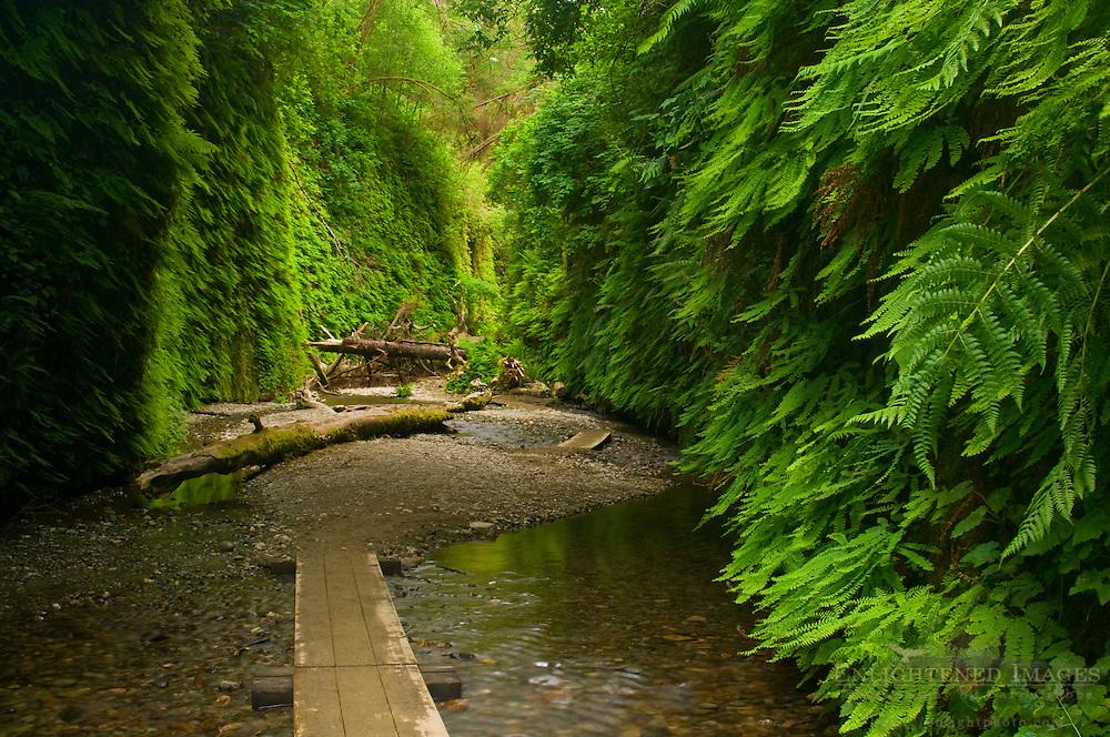 Boardwalk trail through Fern Canyon, Prairie Creek Redwoods State Park, California