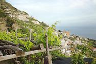 Grape Arbor, Amalfi Coast, Italy