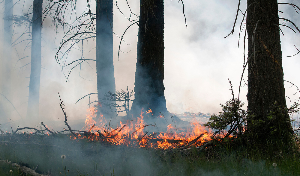 em061517b/jnorth/The Bonita Fire is burning around 2000 acres in the Carson National Forest near Canon Plaza Thursday June 15, 2017. (Eddie Moore/Albuquerque Journal)