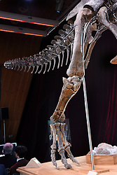 The skeleton of a Theropod dinosaur before the start of an auction on the Eiffel Tower. The 8,7 metre long dinosaur skeletion was discovered in the US state Wyoming with French data from the auction house Aguttes. The estimated price lies between 1,2 and 1,8 million euros. Paris, France, June 4, 2018. Photo by Alain Apaydin/ABACAPRESS.COM ¥	Dinosaure ¥	Squelette ¥	Vente aux encheres