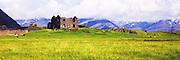 Abandoned farm at Iceland, with sheeps grazing on green grass and yellow flowers. Have added a bit of paint effect | Forlatt gård på Island, med sauer som beiter på grønt gress og gule blomster. Har lagt til litt malerisk effekt.