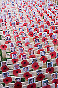 Crosses and poppies mark fallen soldiers killed in Afghanistan, seen during Remembrance weekend at Westminster Abbey, London.