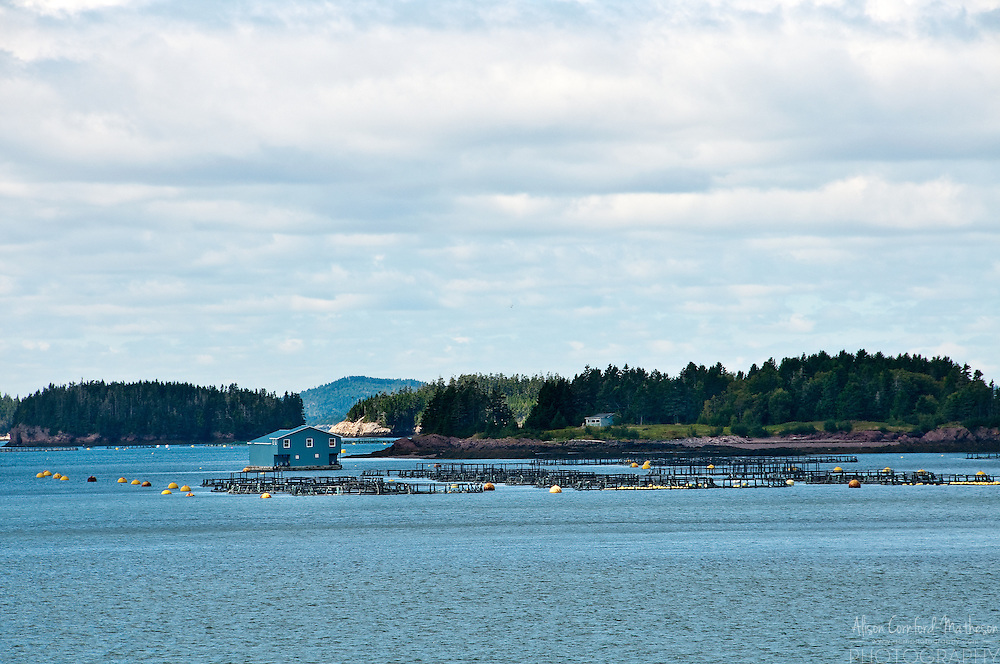 Aquaculture in Blacks Harbour, New Brunswick