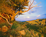 0103-1025 ~ Copyright: George H. H. Huey ~ View from Sugarloaf Mountain Trail of the Heart-of-Rock area. Chiricahua National Monument, Arizona.