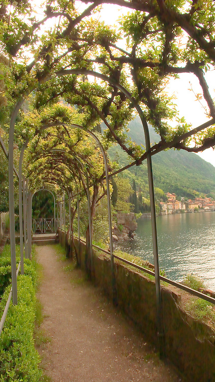 An arbor of Lady Banks rose in the gardens of Villa Monastero, Varenna, Italy, on Lake Como.